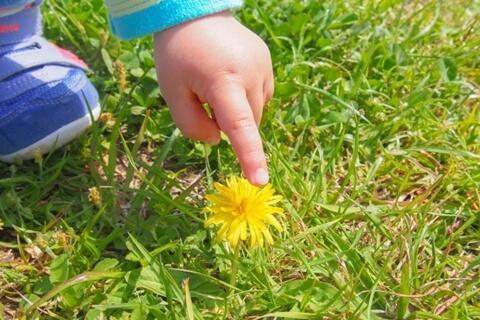 観葉植物には触るのはよくない?触ってよい場所、悪い場所を教えます。
