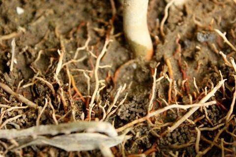 植物の根が元気に育つ3つの条件。快適な土づくりのヒントがあります。