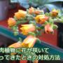 多肉植物に花が咲いたらご用心!花が咲いて多肉植物が弱ったときの対処方法。